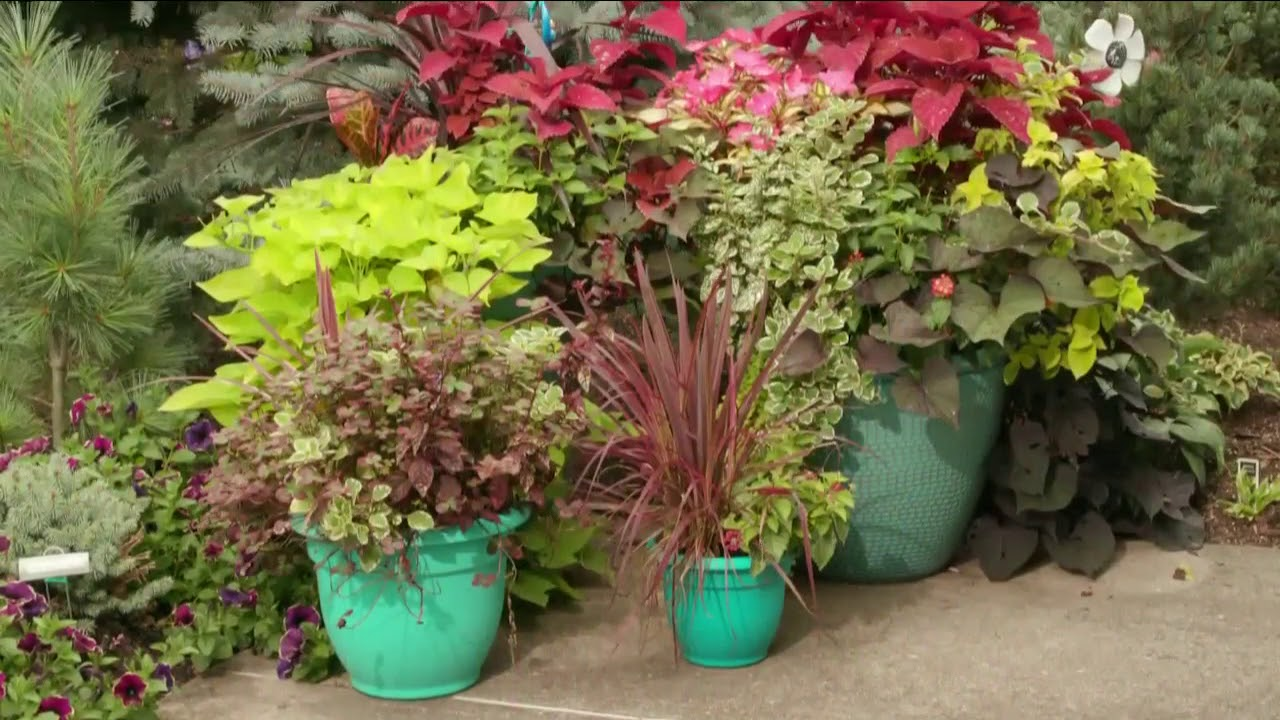Melinda\'s Garden Moment Colorful Containers - YouTube