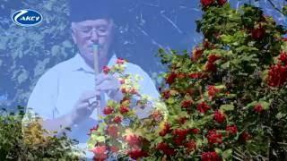 Курай   татарский национальный музыкальный инструмент   Рафаэль Гайзетдинов Кошлар кебек
