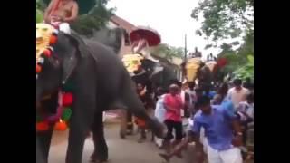 Слон ударил человека прикол 2017
