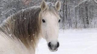 Фильм Белый конь