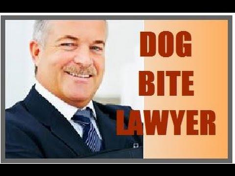 Free Dog Nampa