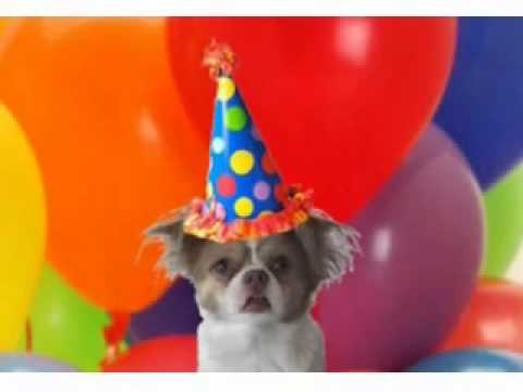 Chihuahua Sings Happy Birthday Youtube