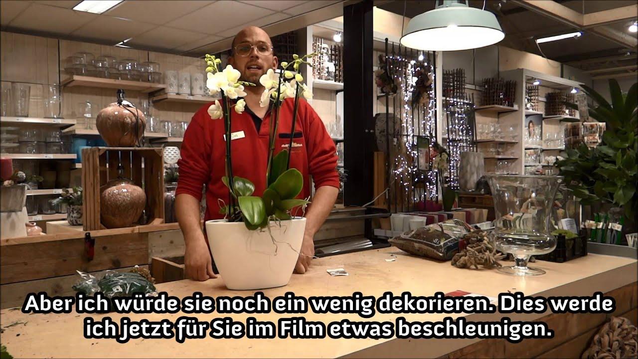 leurs tipp duo topf orchideen youtube. Black Bedroom Furniture Sets. Home Design Ideas