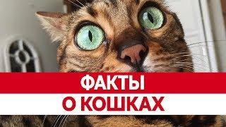 Вся ПРАВДА О КОШКАХ! Интересные факты о кошках!