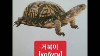 Корейский язык. Животный мир в картинках.