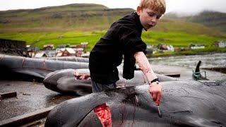 Остановить Гриндадрап, Фарерские Острова, Убийство Дельфинов