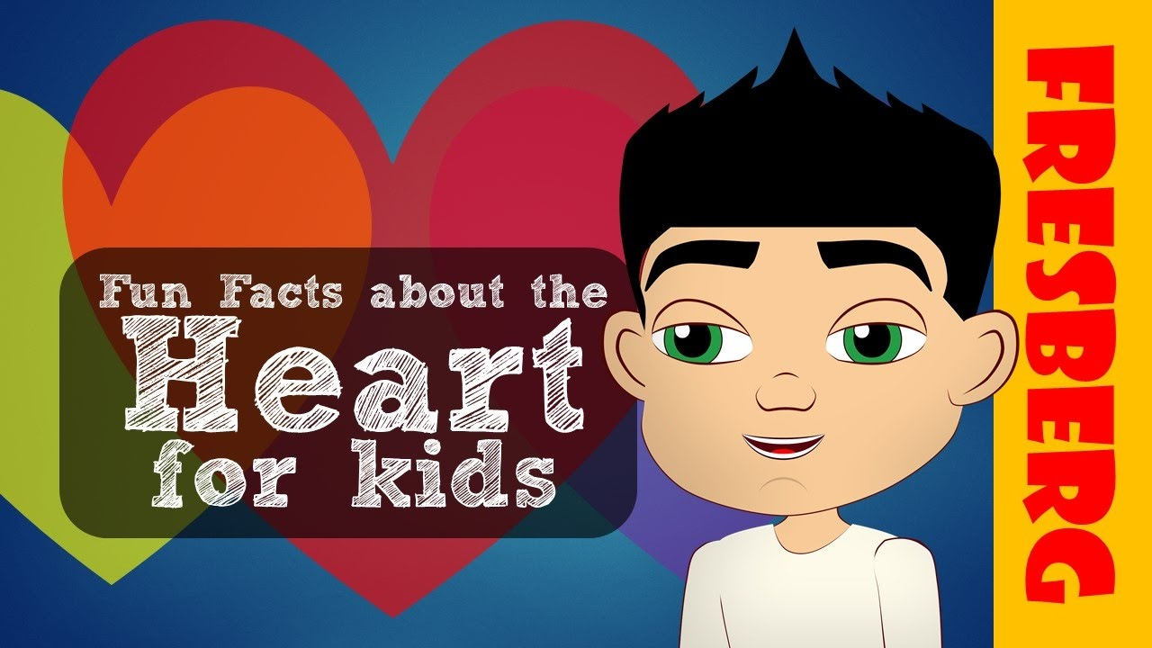 Heart for kids: The anatomy of the heart. Heart chambers and valves ...
