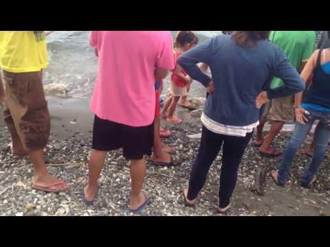 Oarfish Found in Cagayan de Oro City last  February 18, 2017