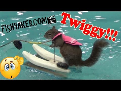 Twiggy the Water Skiing Squirrel at the Detroit Boat Show, 2018
