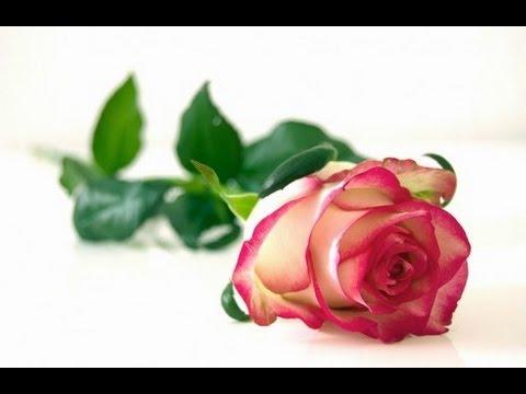 تفسير رؤية الورد الابيض او الاحمر او الاصفر و الزهور في المنام