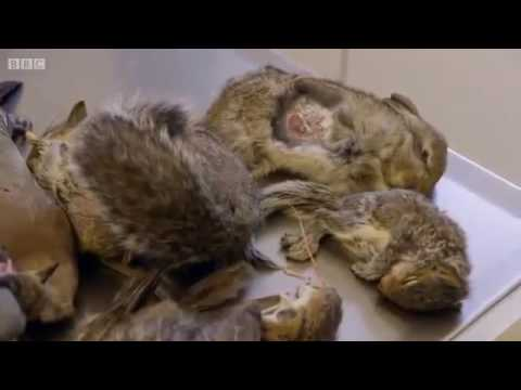 Cat Wars BBC Documentary 2014