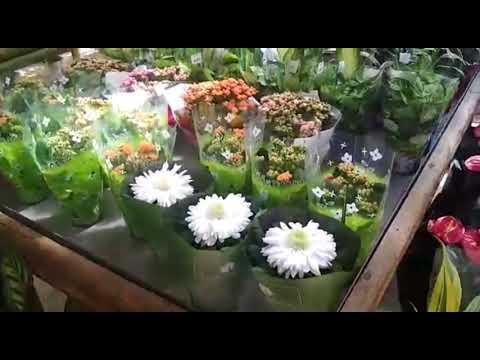 Гигантский цветочный магазин.