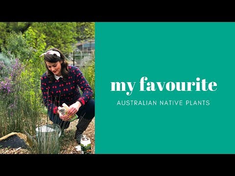 5 Must Have Australian Native Plants || Native Australian Plants // The Gardenettes