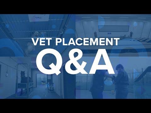 Play video: Vet placement Q&A | University of Surrey