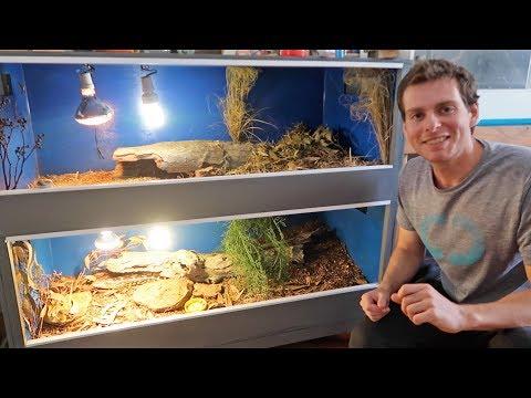 Blue Tongue Lizard Enclosure Set Up!