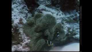 Жак Ив Кусто серия 7.1 Кораловые джунгли