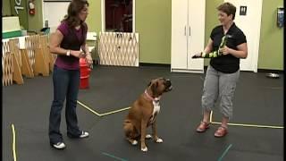 Ottawa Canine School 1