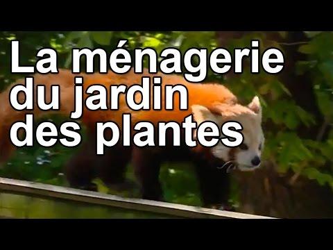 La m nagerie du jardin des plantes youtube for A la verticale du jardin grenoble