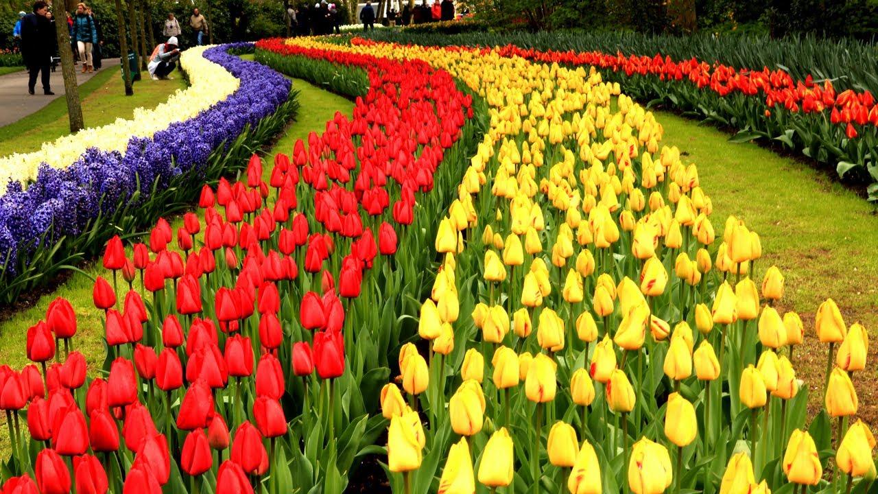 Keukenhof Gardens Netherlands • Tulip Garden in Holland | European Waterways - YouTube