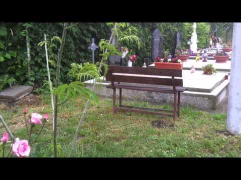 Cimitir Deta (2)