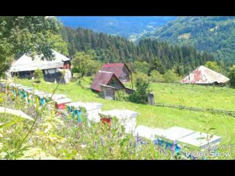 Šekular-Berane-Montenegro