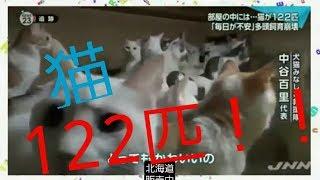 驚き!!【部屋の中には猫が122匹】毎日が不安!JNNニュース!気を受けましょう【とこちゃんチャンネル動物】