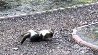 Драка котов в Киевском зоопарке