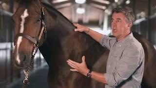 Equine Clinical Neck Exam SonoSite Veterinary Education