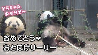 2019/8/16 (1) お誕生日もフリーズおとぼけリーリー^^ 寝食いシャンシャン Giant Panda Ri Ri ,Xiang Xiang & Shin Shin