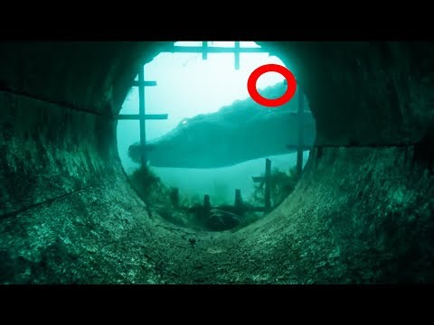crawl-trailer-#1-(2019)-|-horror-movie