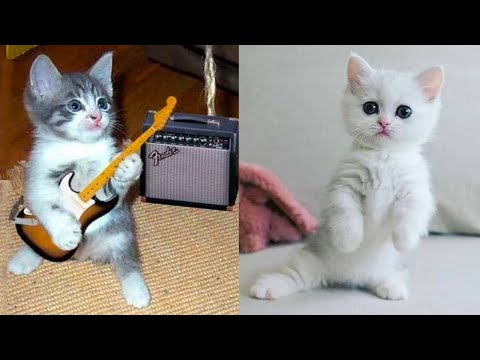 Baby Cats - Cute and Funny Cat Videos Compilation #33 | Aww Animals