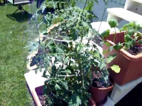 Topsy Turvy, Garden Containers, Upside Down Pots, Growing Tomatoes, Peppers & Herbs Update 4