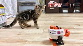 子猫に変な動きをするロボットを近づけたときの反応がこちらですw