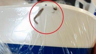 EW! Cockroach found in Bangkok Airways airplane food