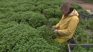 Kentucky Farm Bureau Presents Bluegrass and Backroads: Bill Dohn's Mint Farm