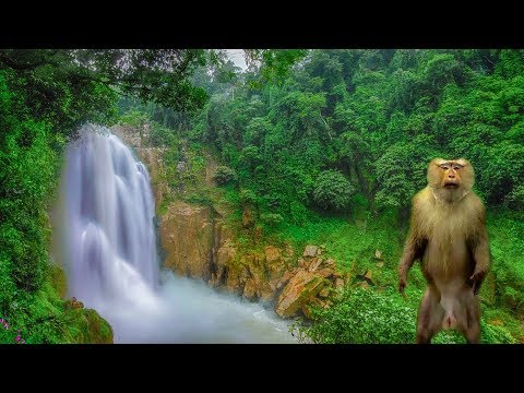 Haew Suwat & Haew Narok Waterfall Khao Yai National Park Thailand