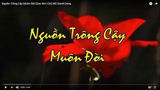 Nguồn Trông Cậy Muôn Đời (Cao Kim Chi) David Dong