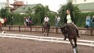 «Вятка Московии - 2013»- Региональная выставка лошадей в ЧКСК  «Лаир» 17