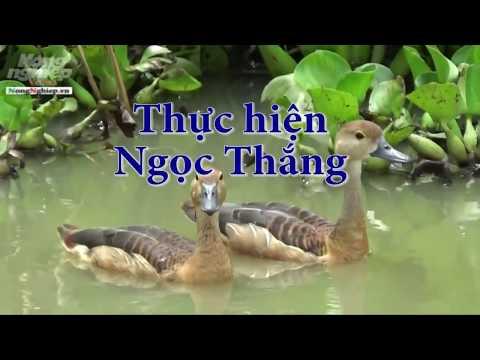 Nuôi 200 Con Le Le Trong Ao Thu Nhập 250-300 Triệu đồng/năm