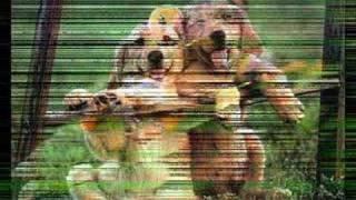 hayvan belgeseli