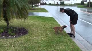 Training a Puppy in Rain