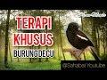 Terapi Khusus Burung Decu  Mp3 - Mp4 Download