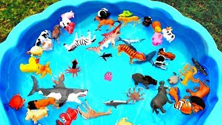 Lots of Zoo Wild Animals Learn Colors For Children With Real Safari Videos thumbnail