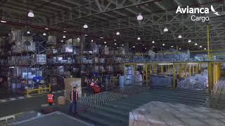 Video Procesos Avianca Cargo download MP3, 3GP, MP4, WEBM, AVI, FLV Juni 2018