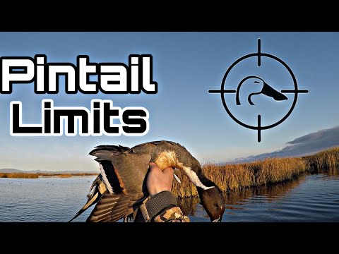 Pintail Limits, Wigeon, AndTeal On Last Duck Hunt Of The Season! CA Refuge Hunting 01-29-20