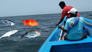 LONGLINE FISHINGAMAZING DOLPHINS FISH , KING FISH ,GROUPER FISH AND CATFISH CATCHING AT OFFSHORE