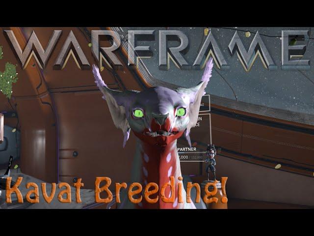 Warframe Kavat Breeding Basics Youtube
