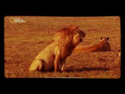 Lachender Löwe #schlechte witze