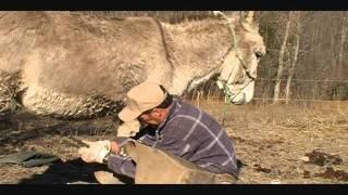 Jack the problem donkey.....NOT.wmv