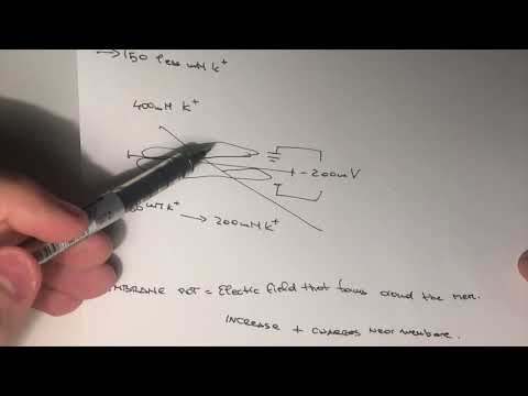HARVARD ONLINE: Neuroscience - homework question #6